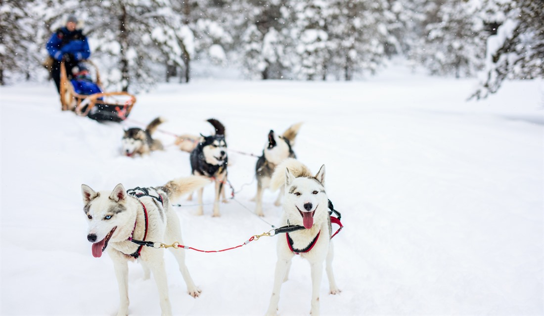 Five of the best winter activities in Finnish Lapland : Section 3