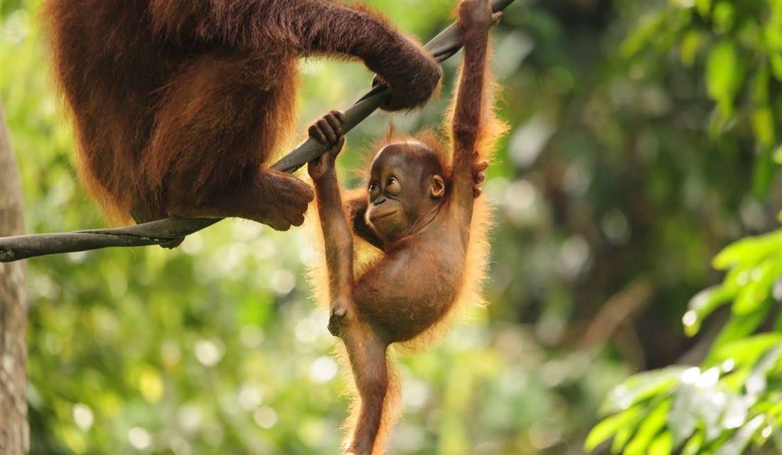 Borneo wildlife: what to see on holiday : Section 2