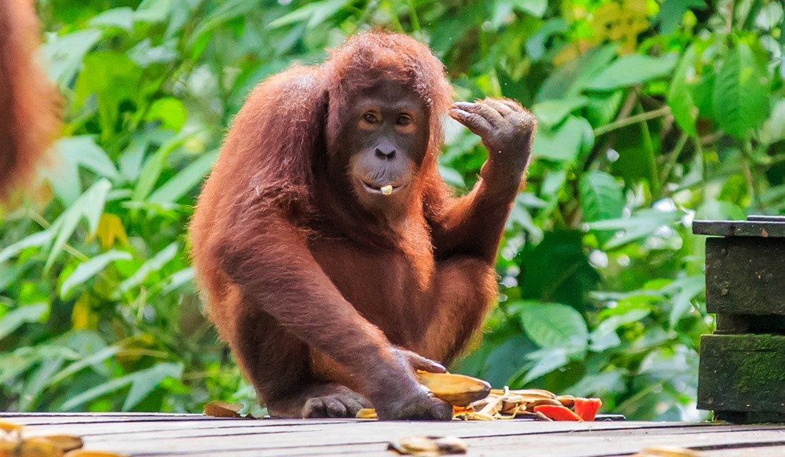 Borneo wildlife: what to see on holiday : Section 4