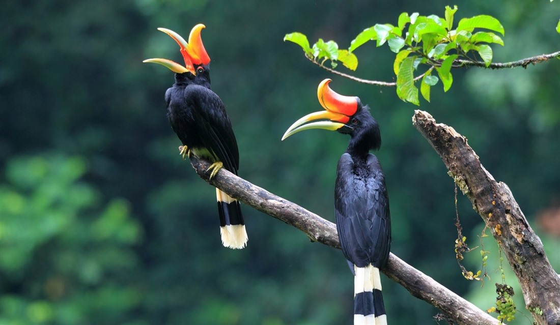 Borneo wildlife: what to see on holiday : Section 10