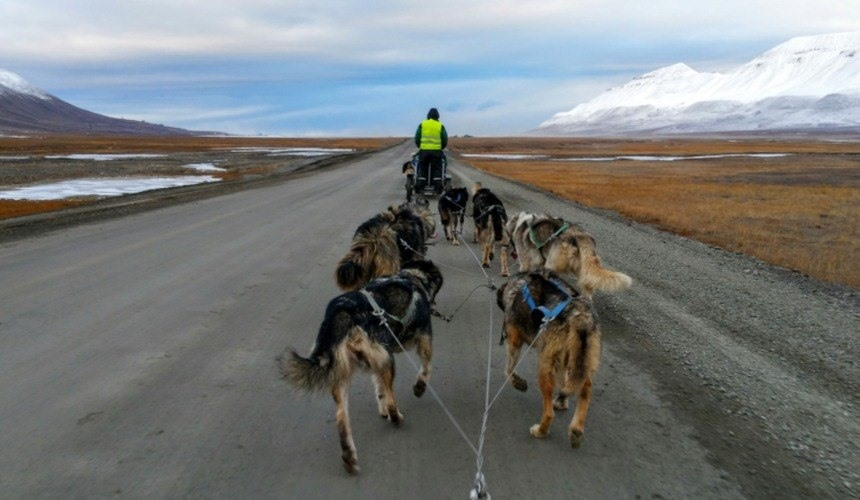 Top Five Summer Experiences in Svalbard  : Section 4