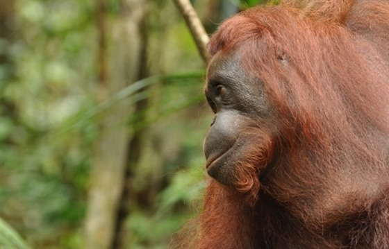 Borneo Rainforest Lodge and the Wildlife of Danum Valley : Section 4