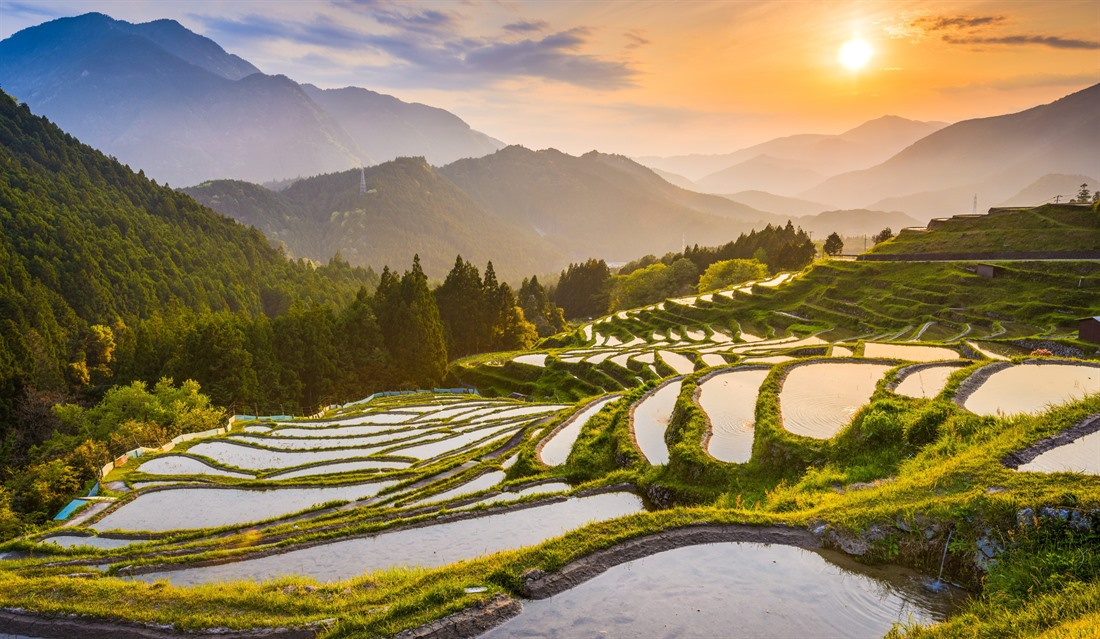 Sunset over rice terraces near Maruyama-senmaida in Kumano prefecture
