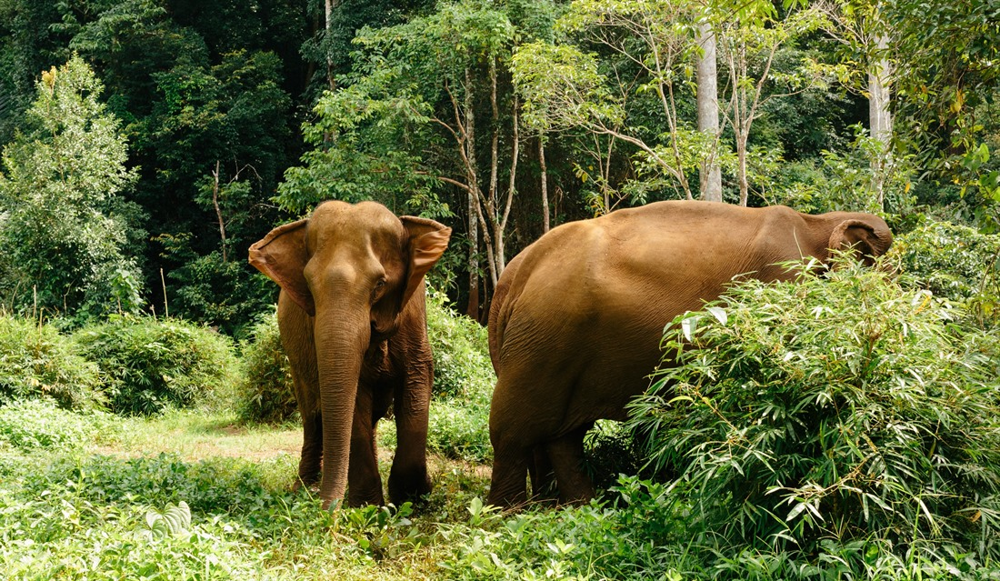 Elephants in Mondulkiri