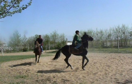 Discovering the Akhal-teke horses of Turkmenistan : Section 2