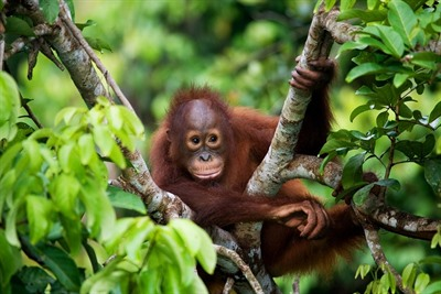 Borneo wildlife: what to see on holiday