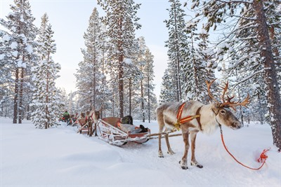 Lapland Holiday FAQ's: your questions answered
