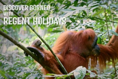Watch Video: Wildlife Holidays in Sabah, Borneo