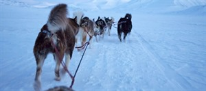 Dog Sledding Tour 1