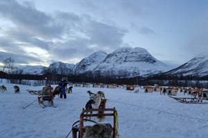 Dog sled yard near Tromso