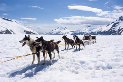 Husky safari for Nature lovers