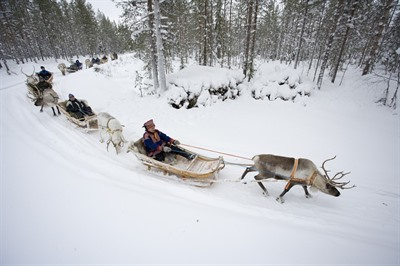 Reindeer Safari into the Deep Forest