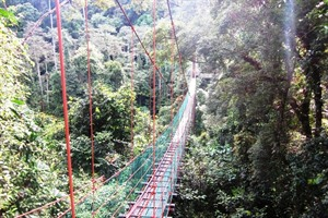 Borneo Rainforest Lodge - canopy walkway