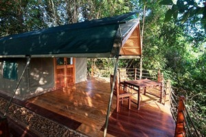 Forest Floor Lodge - Safari-style tent