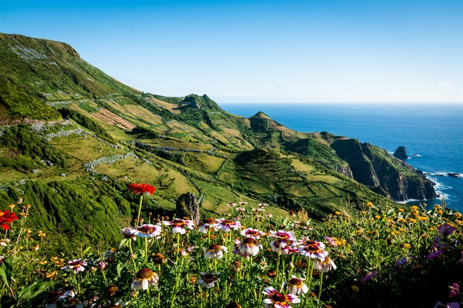 Wildflowers on Flores Island