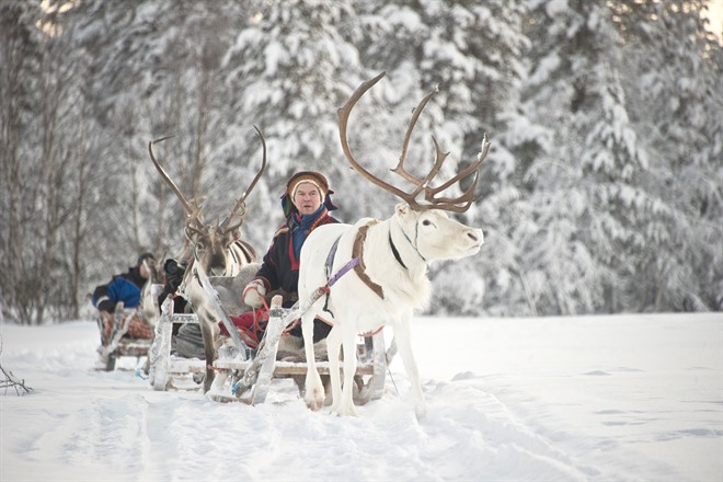 Reindeer Sled Ride in Lapland