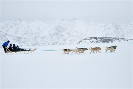 DOG SLEDDING TO QERNETIVARTIVIT