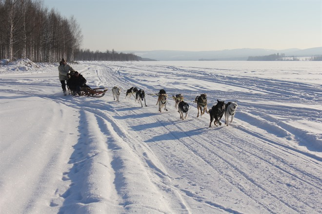 DOG SLEDDING EXCURSION