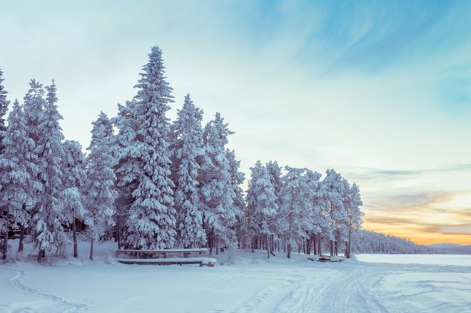 FREE DAY IN LAPLAND