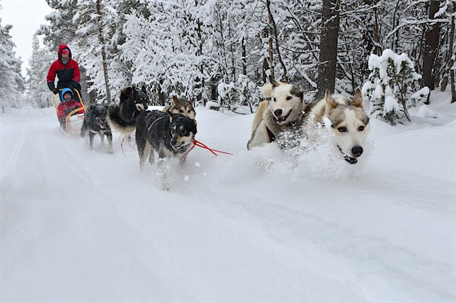 Dog Sledding at Lyngen Lodge