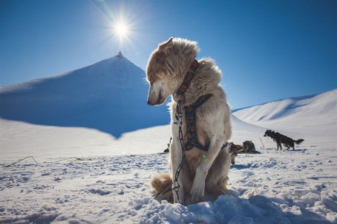 Dog Sledding in Bolterdalen