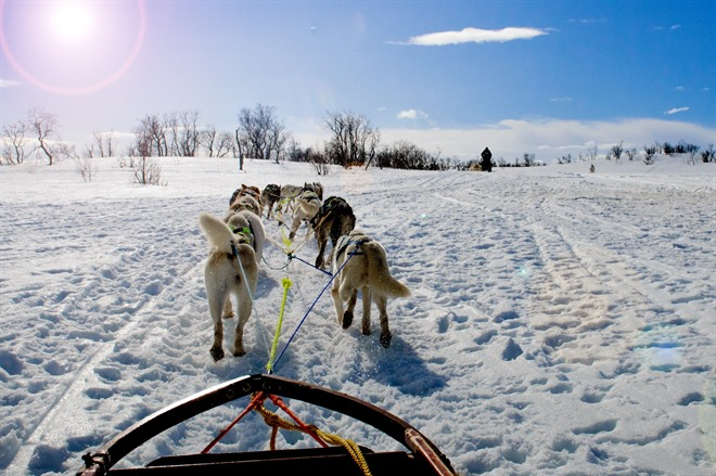 DOGSLEDDING AND AURORA HUNTING