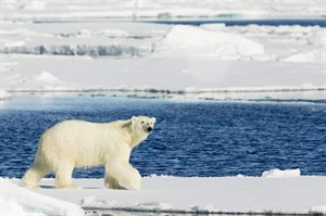 Arctic Cruises - Polar Bears & Pack Ice Cruise - M/V Hondius 3