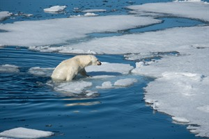 Arctic Cruises - West Spitsbergen & Polar Ice Edge 5