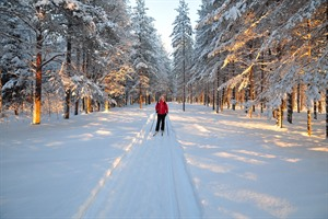 Cross-country skiing at the Arctic Retreat