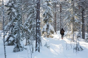 Snowshoeing through the forest