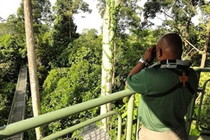 Canopy walkway at RDC
