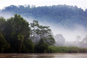 Early morning on the Kinabatangan River