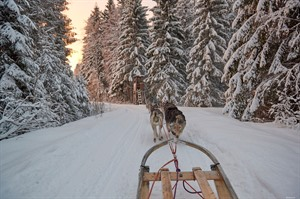 Dog Sledding in Swedish Lapland