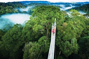 Canopy walkway Ulu Temburong National Park, Brunei