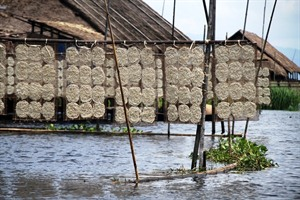 Rice paper drying on Inle Lake