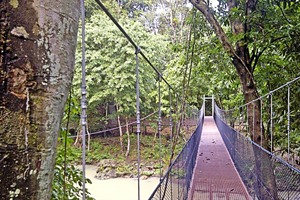 Tabin Wildlife Reserve suspended walkway
