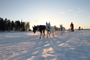 Finland Husky Experience Group Tour 2