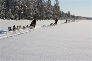 Finland Husky Experience Group Tour 5