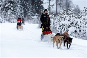 Finland Husky Experience Group Tour 6