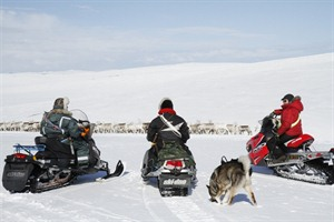 Herding Reindeer the modern Sami way