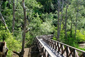 Boardwalk in Bako National Park