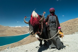 Yak and herder
