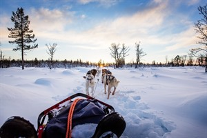 Husky Sledding in the Tromso area