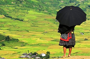H'mong woman overlooks the rice terraces