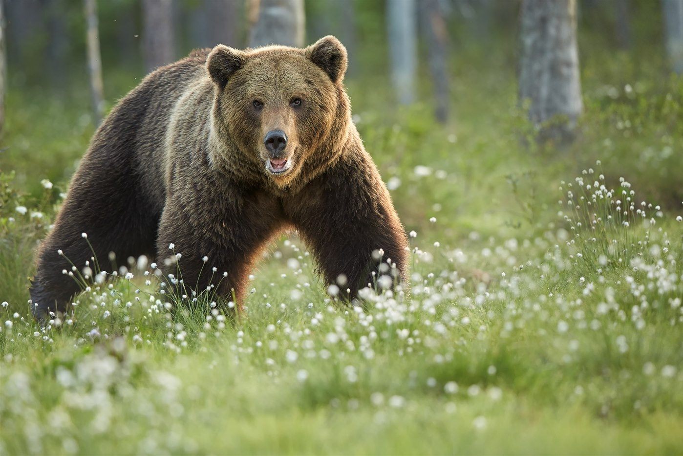 Bears, Wolves & Wildlife Adventure | Book Finland Tours