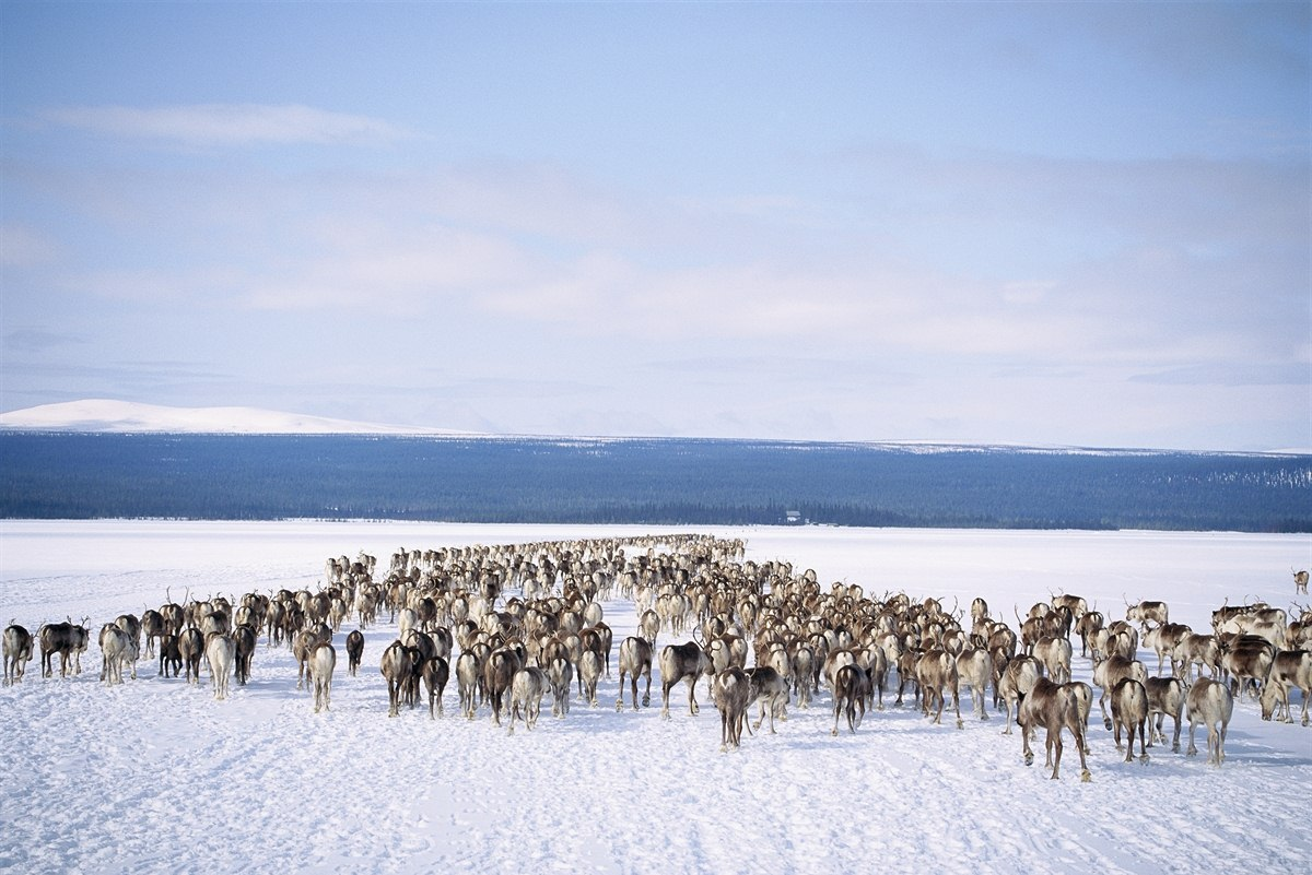 Tours In Norway Sami Adventures