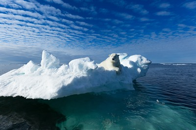 Arctic Cruises - Polar Bears & Pack Ice Cruise - M/V Plancius