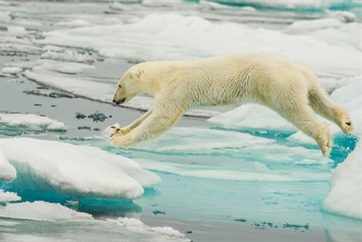 Arctic Cruises - West Spitsbergen & Polar Ice Edge