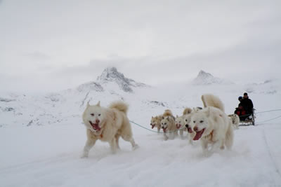 East Greenland Dog Sledding Expedition