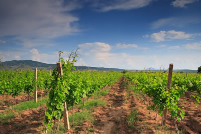 Wine Tour of North Macedonia